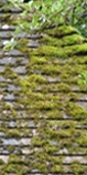 roof-tiles-5